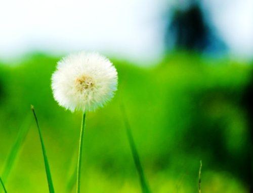כותבת את החזון שלך לשנה החדשה? הנה 5 דברים שאת רוצה לדעת כדי לכתוב חזון שבאמת מגשים – חלק א'