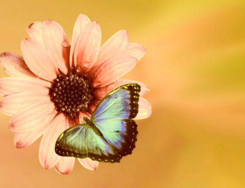 תקשור הוא מעשה של אהבה ~ 8 תובנות על תקשור